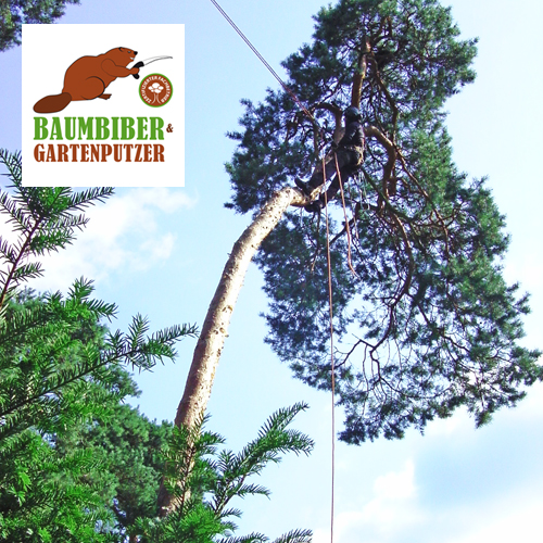 Baumbiber-leistung00-Copyright-Baumbiber