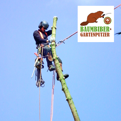 Baumbiber-leistung03-Copyright-Baumbiber